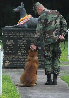 military-working-dog